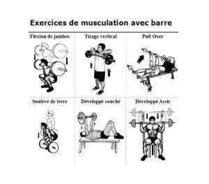 Cycle de Musculation : Rappel, contenus et organisation – AMLA